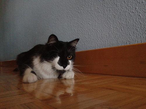 Microcuento: El regalo del gato Gazpacho