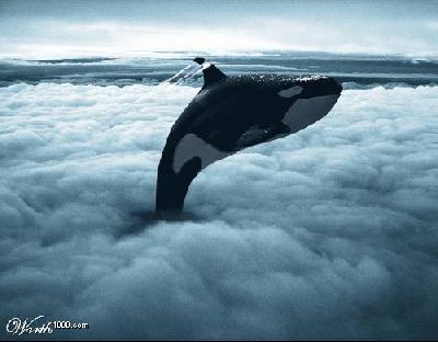 ¿Con qué sueñan las ballenas?