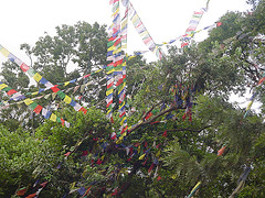 El Monkey Temple se llama Swayambhunath