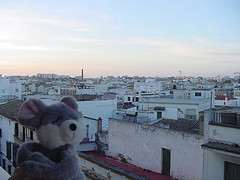 Euca vuelve de su viaje de 18 horas a Jerez