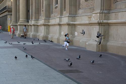 Fotosíntesis en Zaragoza