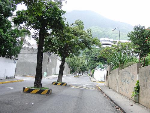 Árboles conservados en mitad de la calle