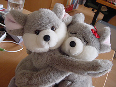 Votación para bautizar a los koalas