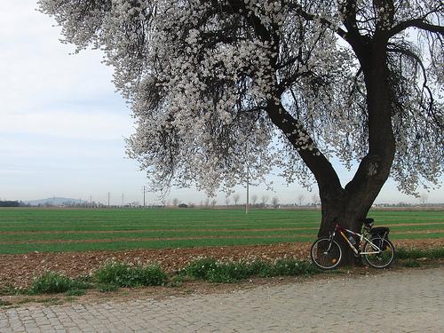 Ruta en bici de Alcalá a Guadalajara