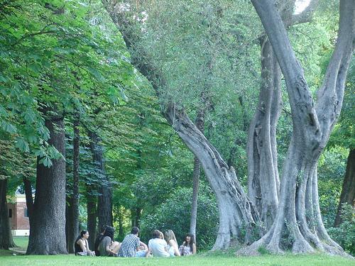 Árbol mágico en El Retiro