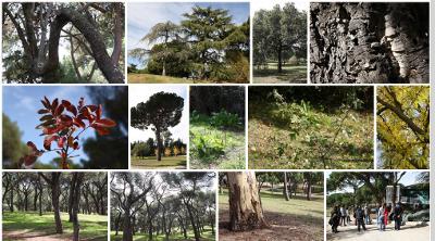 Itinerario por árboles y arbustos de la Dehesa de la Villa