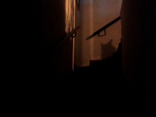 sombra del Oli