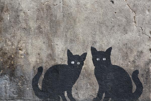 valencia - gatitas