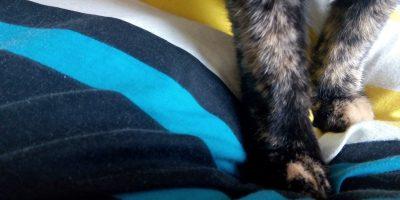 patitas peludas de gata sobre colcha, todo con aspecto de gran suavidad