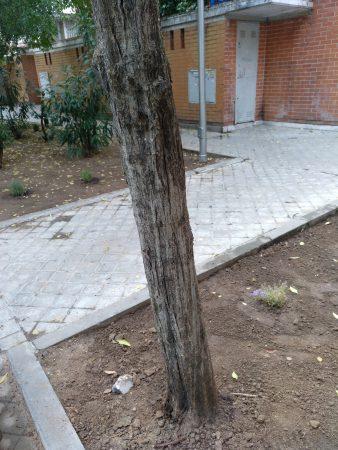 árbol muerto