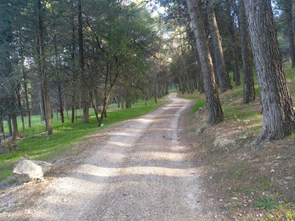 Camino de umbría. Es de tierra compactada. Alrededor tiene pinos