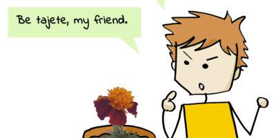 Olga a flor: ¿Cómo puede estar tan quieta y a la vez ser tan bonita? Be tajete, my friend.