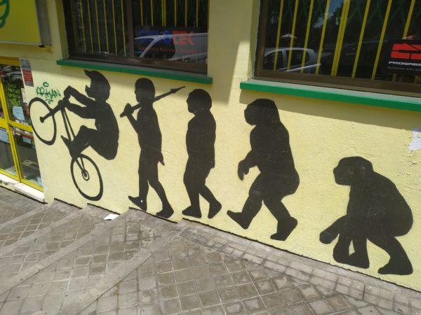 Típico dibujo de la evolución de simio a humana y acaba en ciclista